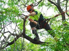 ad13f249-tree-pruning1