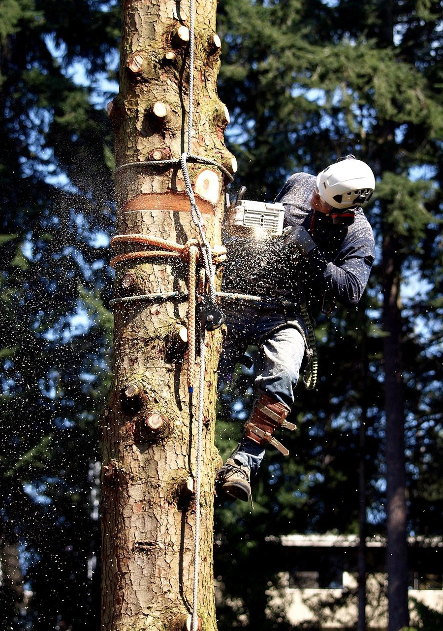 Jim Folger performing tight-quarter removal on a dead Hemlock.