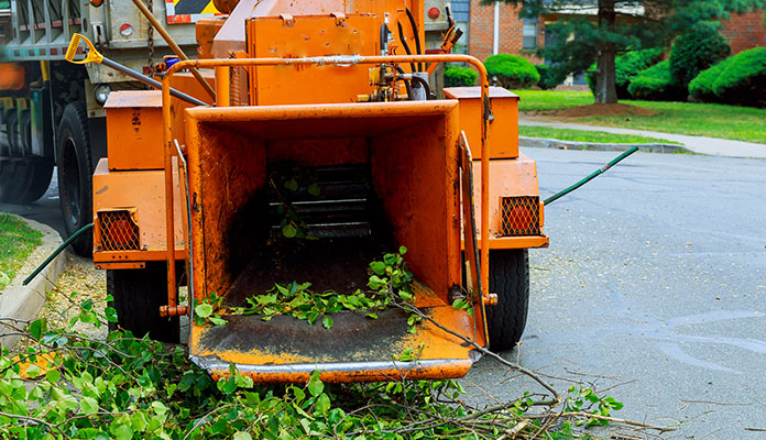 Tree Removal Woodinville